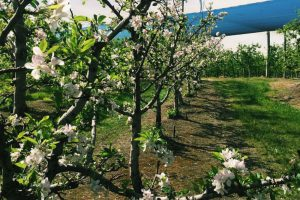 Things to do in Wollongong – Wollongong Scenic Tour - Apple Orchard and Cider tastings - Things to do in Wollongong