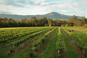 Things to do in Berry-Explore the picturesque South Coast Wine Region - View of Cambewarra Mountain