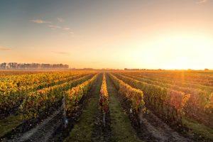 Southern Highlands Wine Region on a Sydney Wine Tour
