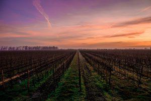 Twilight Wine Tastings at sunset