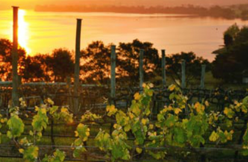 Berry Wine Tours - Twilight Tastings and Dinner Tour – Berry Private Group Wine Tasting Tour – From Berry and surrounding areas