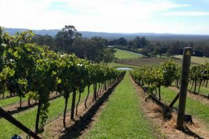 Vineyard on a Southern Highlands Food and Wine Tour