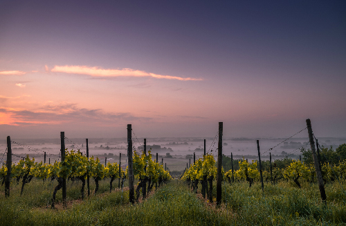 Wollongong Wine Tours - Southern Highlands Winery Tour with Twilight Tastings – Private Group Dinner Tour – From Wollongong