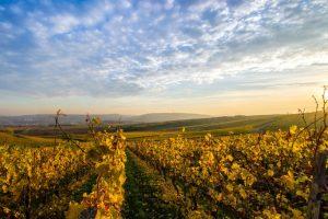 Southern Highlands Restaurant Dinner and Twilight Wine Tasting Tour Vineyard Sunset